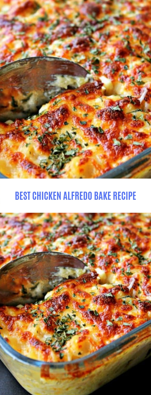 BEST CHICKEN ALFREDO BAKE RECIPE