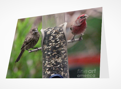 This is a screen shot of a card which I'm selling on Fine Art America. It features a couple of House finches at a tube shaped bird feeder filled with seeds. The female (brownish) is on  the left side of the feeder while the male (red) is on the right of the tube. Info re this card is @ https://fineartamerica.com/featured/dinner-for-two-patricia-youngquist.html?product=greeting-card