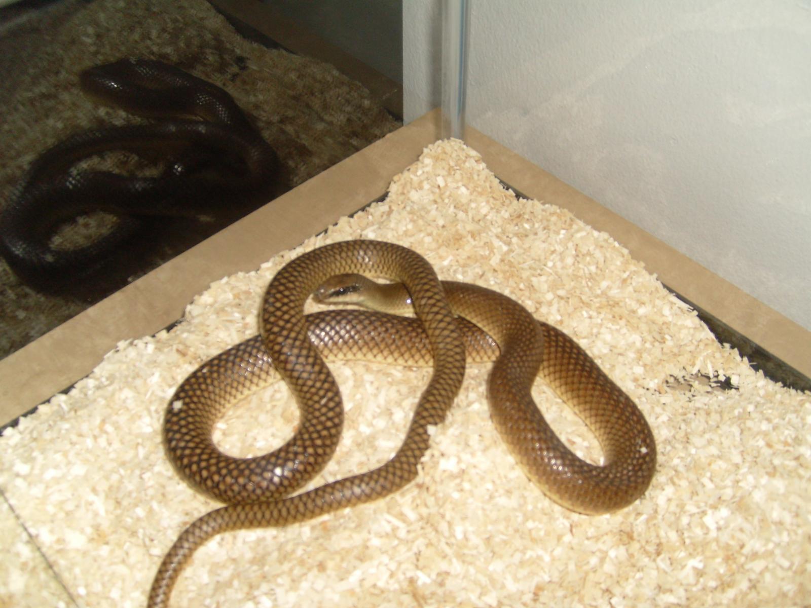 snake - photo #24