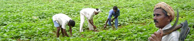 Under this programme, selected women farmers, male farmers and youth have trained-n-guided in agricultural and allied aspects in scientific method.