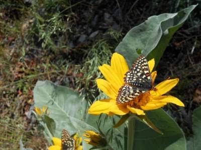 butterfly, yellow flower, spiritual teacher, spiritual student, spiritual work, spiritual discipline