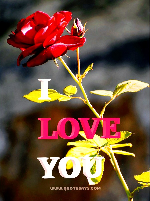 I Love You 3D Images with Red Rose
