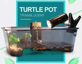 aquarium-kura-kura-tebal.jpg