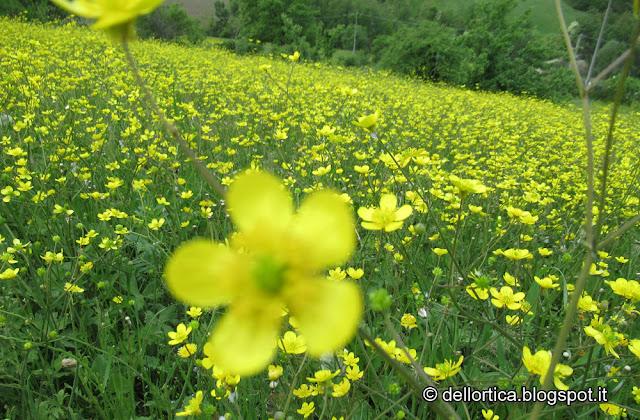 fioriture alla fattoria didattica dell'ortica a Savigno, Valsamoggia, Bologna in Appennino vicino Zocca