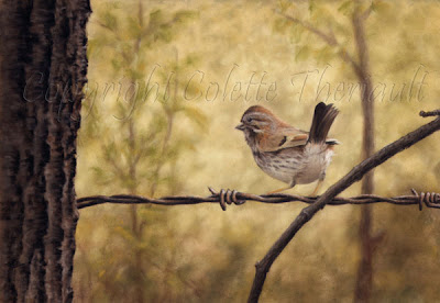 Song Sparrow Bird Painting in Pastel by Colette Theriault Canadian Animal Artist