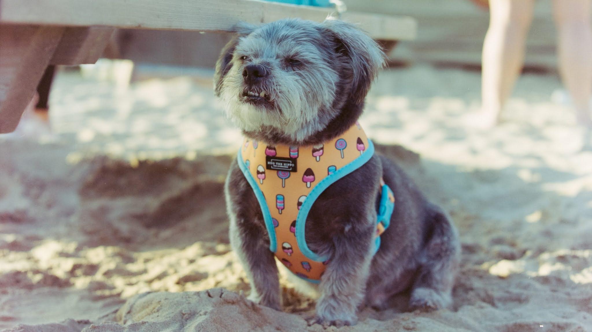 Dog sat on a beach