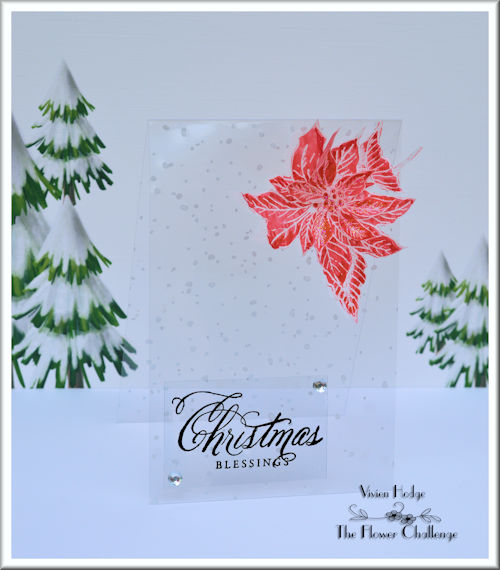 Flower, Christmas, Poinsettia, Acetate, CAS