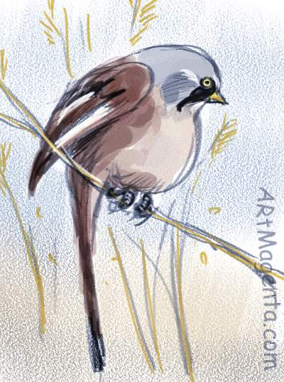 Bearded Reedling is a bird sketch by Artmagenta