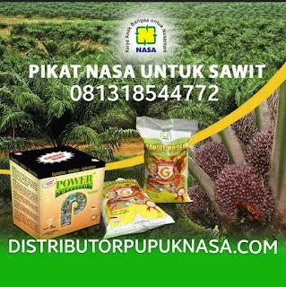 http://www.distributorpupuknasa.com/2019/03/2-jenis-pupuk-sawit-terbaik.html