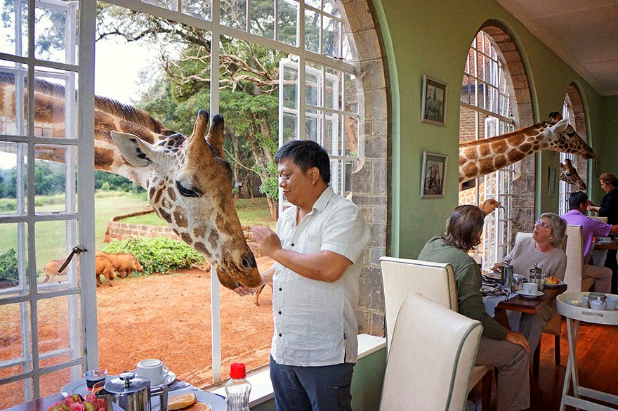 3. Giraffe Manor, Kenya - 26 Of The Coolest Hotels In The Whole Wide World