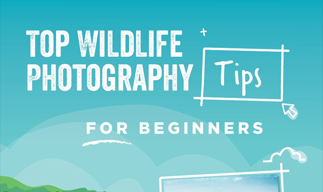 TOP WILDLIFE PHOTOGRAPHY TIPS FOR BEGINNERS #INFOGRAPHIC