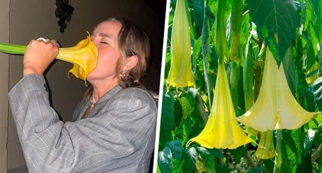 """VIDEO: Tiktoker huele flor sin saber qué era Y TERMINA SUPER MAL """"Soñé con los angeles"""""""