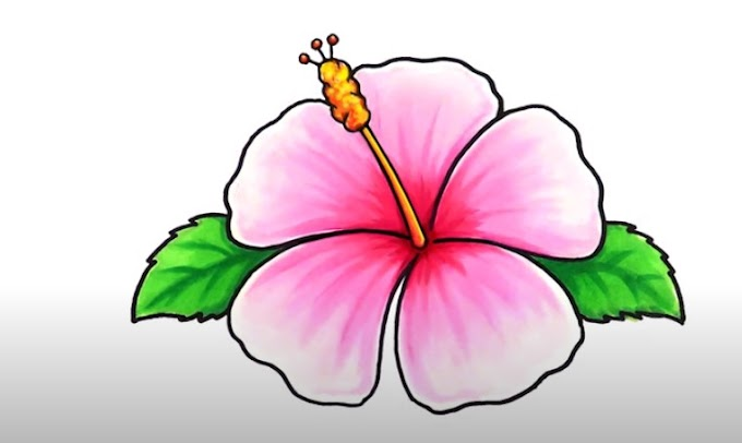 Drawing Flowers Step By Step For Beginners
