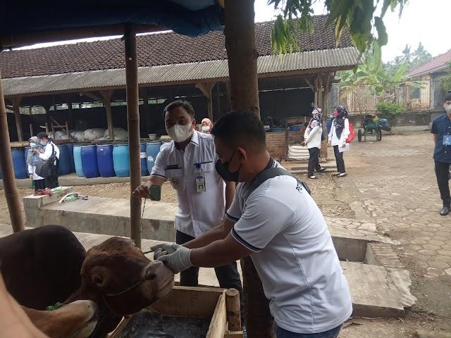 Dinas Pertanian dan Peternakan Kabupaten Pesawaran Periksa Hewan Kurban