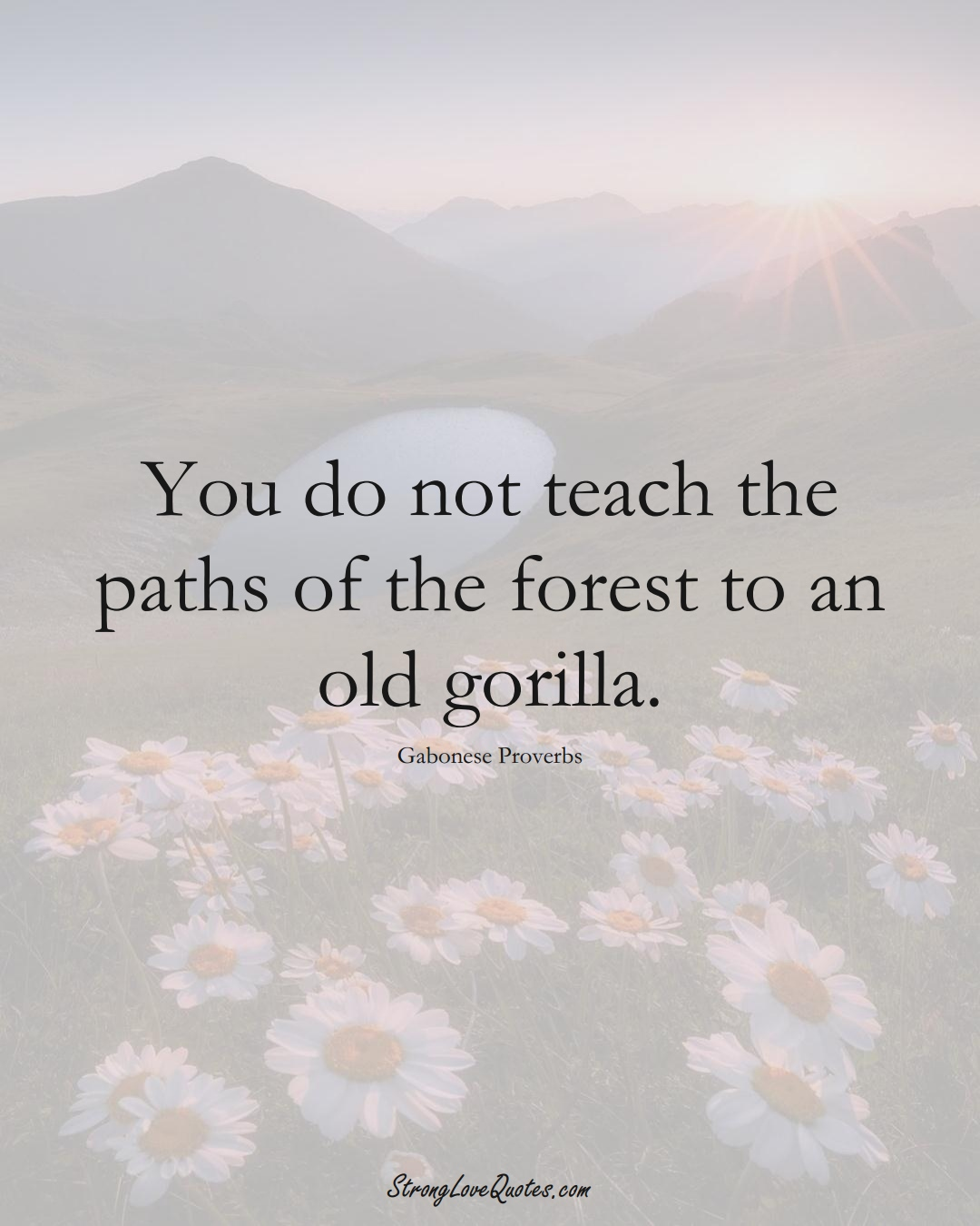 You do not teach the paths of the forest to an old gorilla. (Gabonese Sayings);  #AfricanSayings