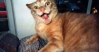 Kucing sedang marah