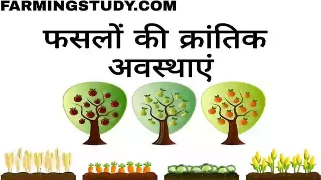 फसलों की क्रांतिक अवस्थाएं, critical stages of crops in hindi, critical stages, फसलों के लिए सिंचाई की आवश्कता, उपयुक्त समय एवं सिंचाई की विधि, गेहूं, गन्ना, धान, मक्का, चुकंदर फसल की क्रांतिक अवस्थाएं