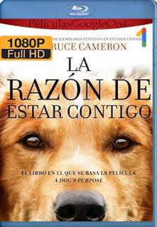 La Razon De Estar Contigo [2017] [1080p BRrip] [Latino-Inglés] [GoogleDrive] RafagaHD