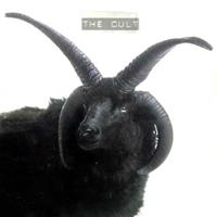 [1994] - The Cult