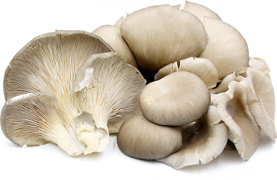 Mushroom Supplier Company in Kakinada