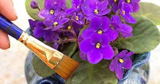 Tips On How To Take Care For African Violets