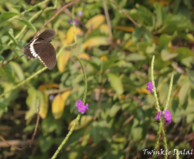 Things to do in Thane, Casual Abstractions, Butterfly, Wildlife in Mumbai