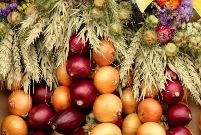 Onion in Hindi