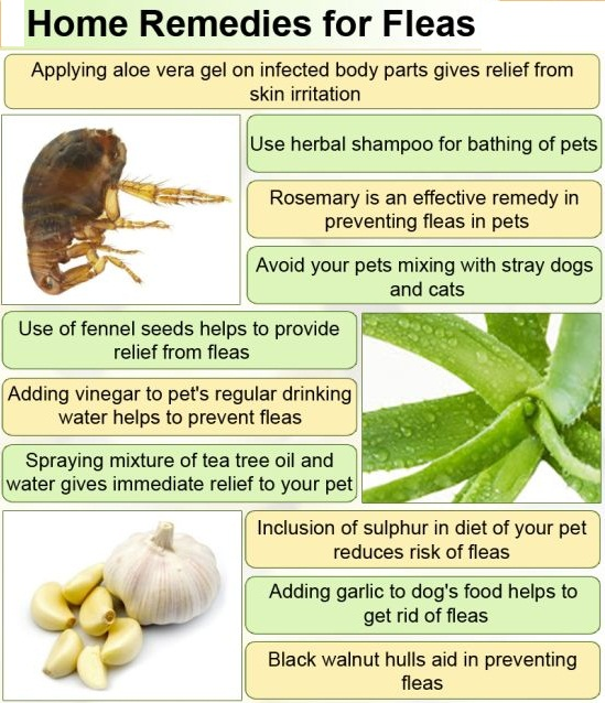 home remedies getting rid of fleas how to get rid of fleas naturally noor lifestyle. Black Bedroom Furniture Sets. Home Design Ideas