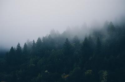 fenyőerdő, erdei történetek, medvetámadás, embertámadás, barnamedve,