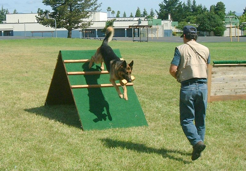 Training dogs to obey