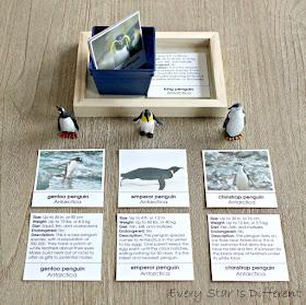 Penguins of Antarctica Picture and Description Cards