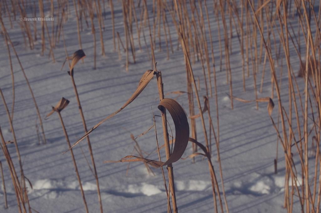 Jezioro Skanda