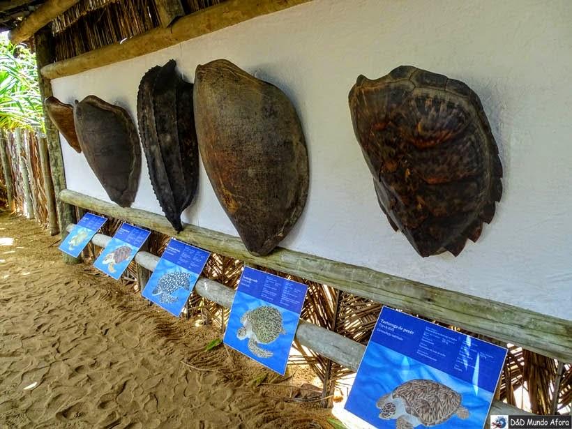Espécies de tartarugas marinhas do litoral Brasileiro Projeto Tamar - Praia do Forte (Bahia)