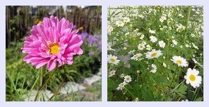 Sneglesikre sommerblomster
