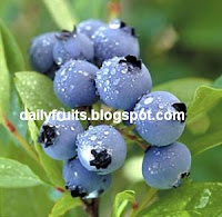 blueberry, fruits health