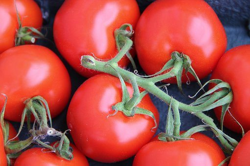 How To Start Tomato Farming In Kenya (Step By Step Guide)