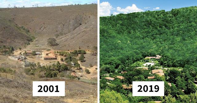 Casal brasileiro refloresta 600 hectares de área para dar lar a 500 espécies ameaçadas de extinção