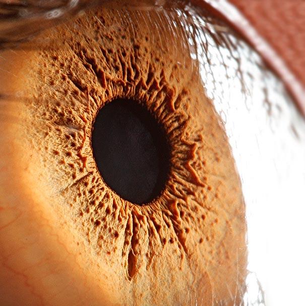eye-macro-photo-7