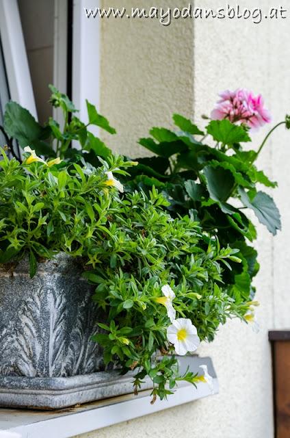 Sommerblumenkasten