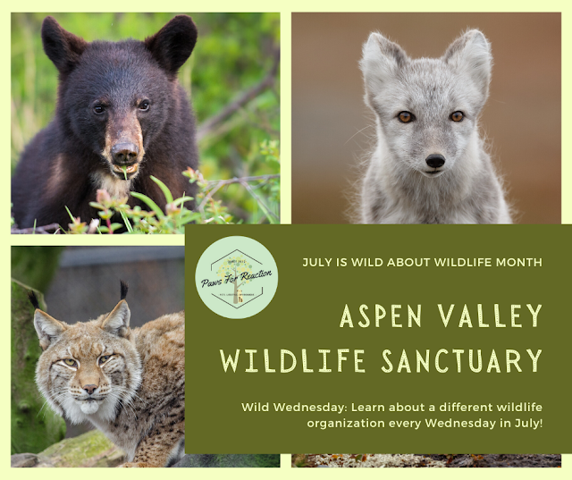 Wild Wednesday: Aspen Valley Wildlife Sanctuary is a leader in wildlife rehabilitation for over 40 years
