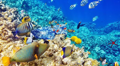 Tourist Attractions of Sri Lanka & Maldives