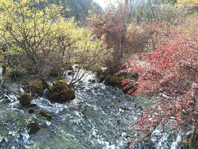 Cửu Trại Câu mùa thu đẹp ngỡ ngàng.