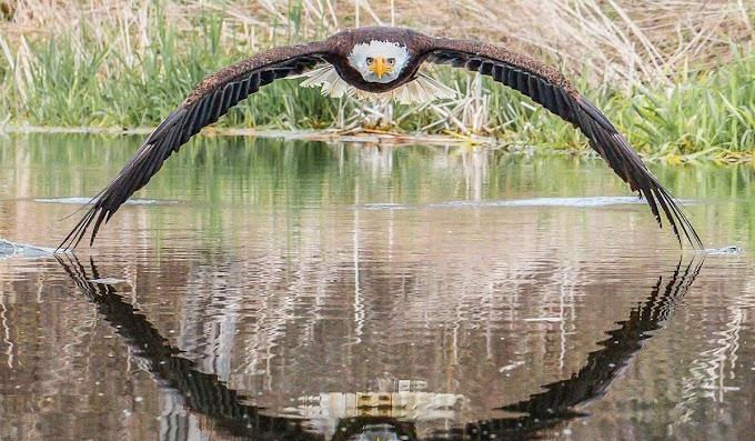 Fotógrafo amador faz registro de águia e imagem vira notícia no mundo