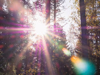 Sunlight in forest - Photo by Patrick Selin on Unsplash