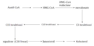 Biosintesis kolesterol
