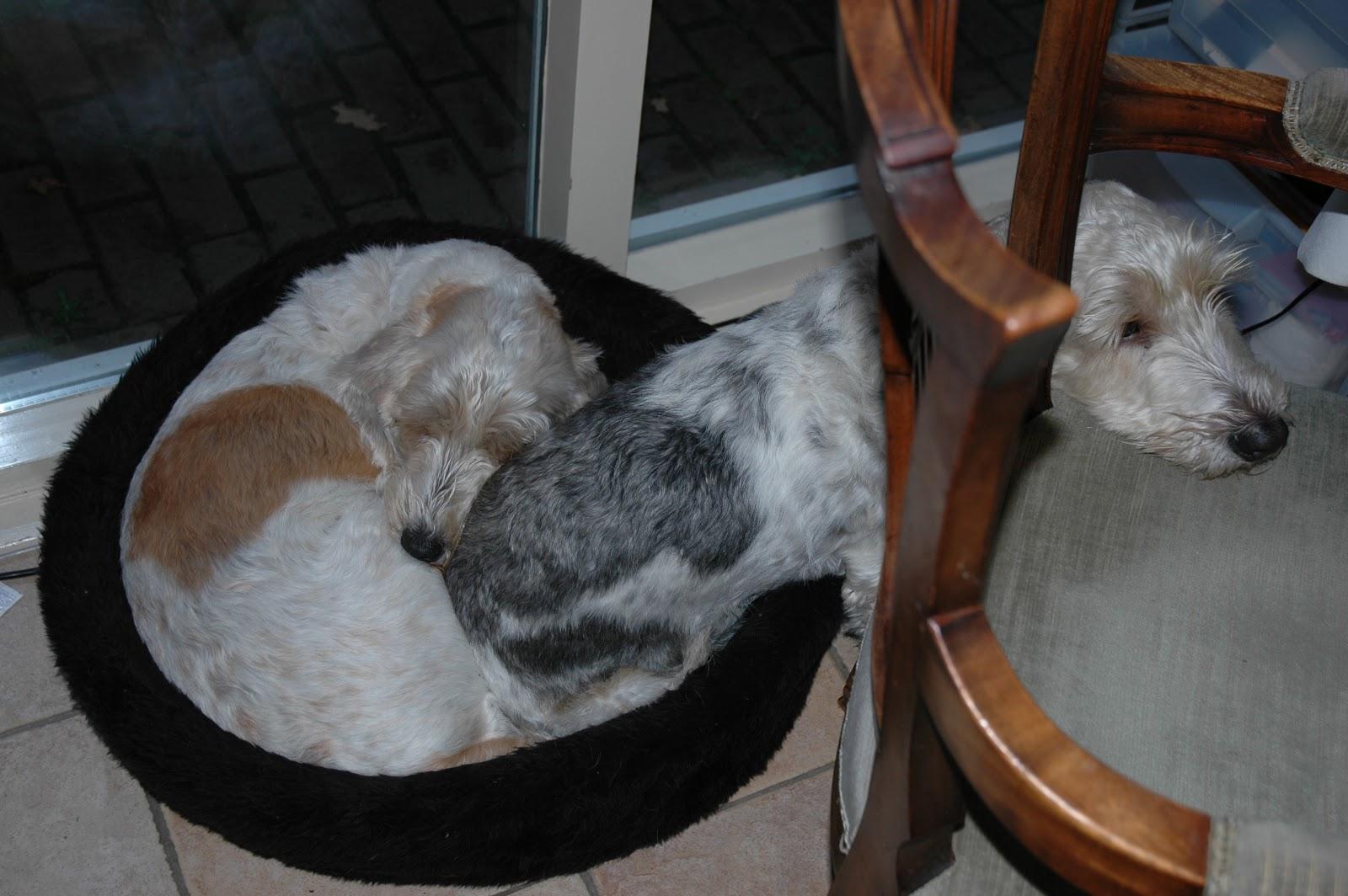 fbc94c73876c64 Zelfs al moeten ze daar hun heerlijke grote hondenmand voor opgeven,  vrienden zullen het nooit worden .