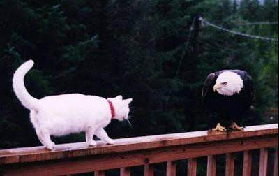 Fotos de Colección: gato v/s ave de rapiña