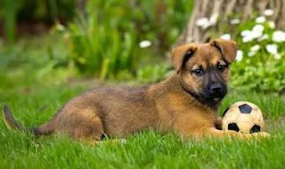 Benessere e salute del cane: Risorse utili per chi ha un amico peloso in casa:)