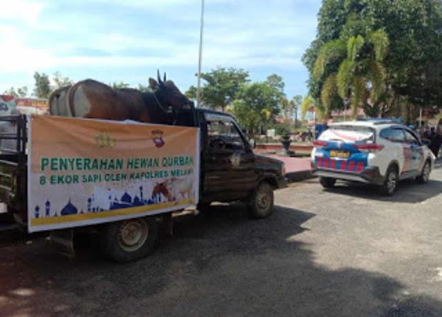 Kapolres Melawi Menyerahkan 8 Ekor Sapi Hewan Kurban Kepada Masjid, Pondok Pesantren serta panti asuhan di Kabupaten Melawi