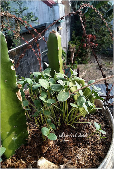 gardening, home, home and living, recycling, urban gardening, tips on urban gardening